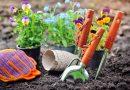 Jak odświeżyć wygląd swojego ogrodu?