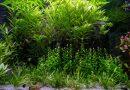 Akwarystyka – podstawowa wiedza o zakładaniu akwarium