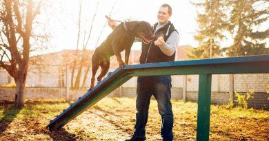 Kim jest psi behawiorysta i jak zostać trenerem psów? Podpowiadamy!