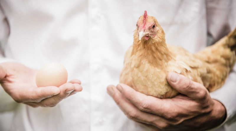 Co było pierwsze? Kura czy jajko?