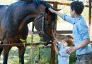 Jazda konna – jeździectwo dla najmłodszych