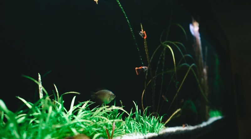 akwarystyka-zakladanie akwarium
